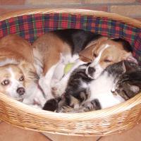 Luna, micio PRU e Brioches (beagle)