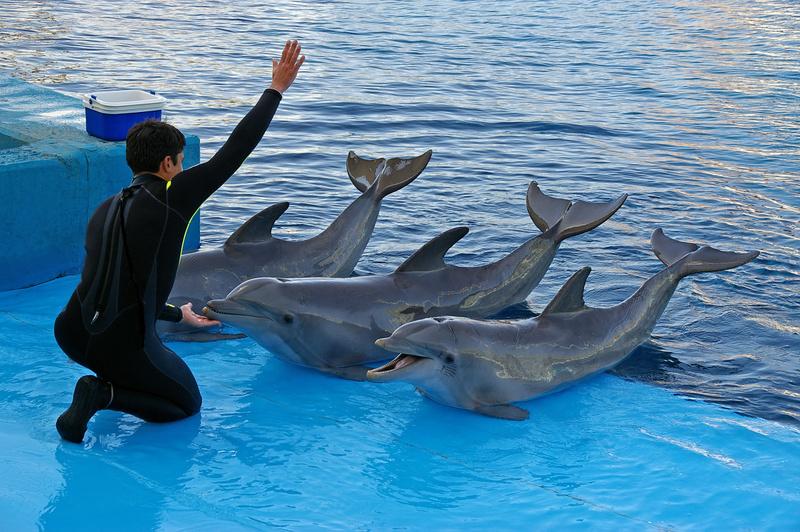 Delfini nel delfinario