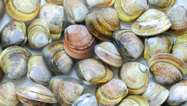 Basta test sui molluschi bivalvi: possiamo salvare tante vite