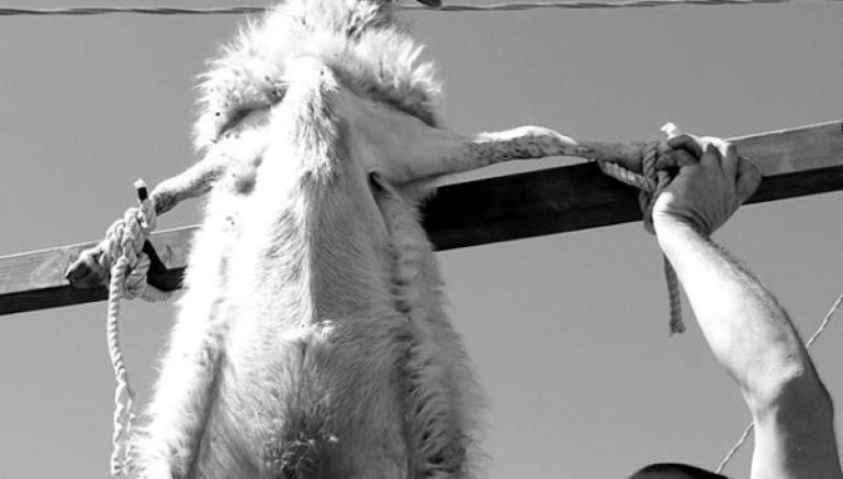 """Animali crocifissi e impiccati, la nostra denuncia contro il film """"L'arbitro"""""""