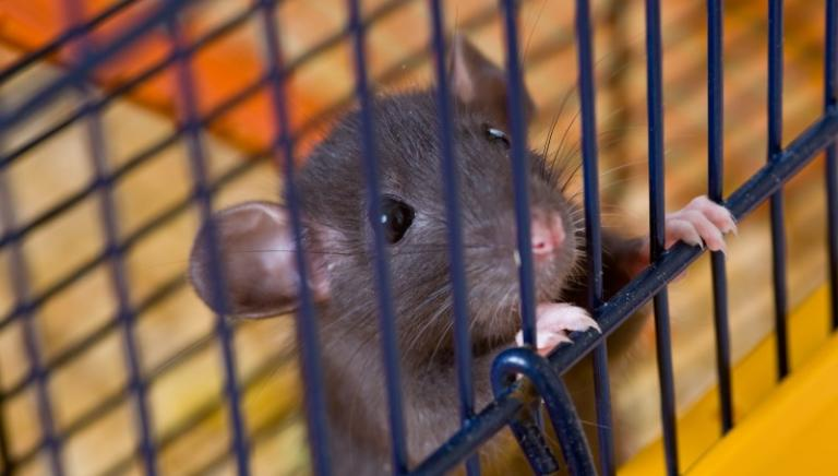 Stop ai test cosmetici su animali: Cina verso svolta animalista?
