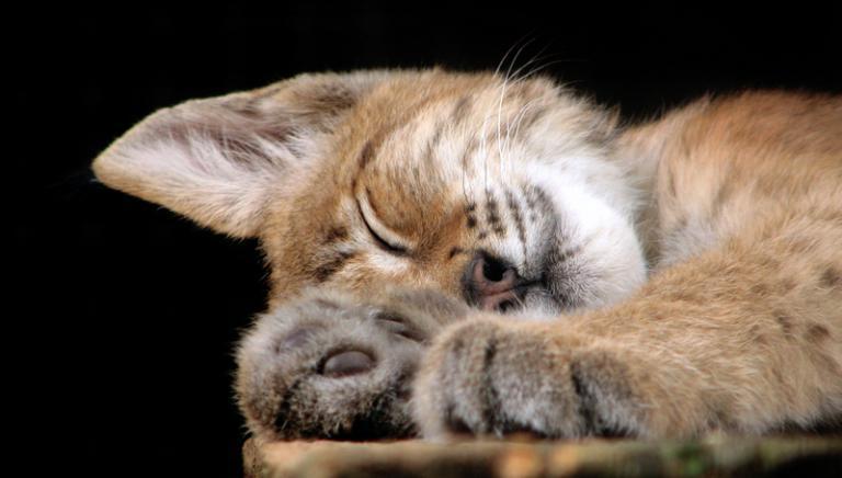 Oggi è la Festa del gatto!