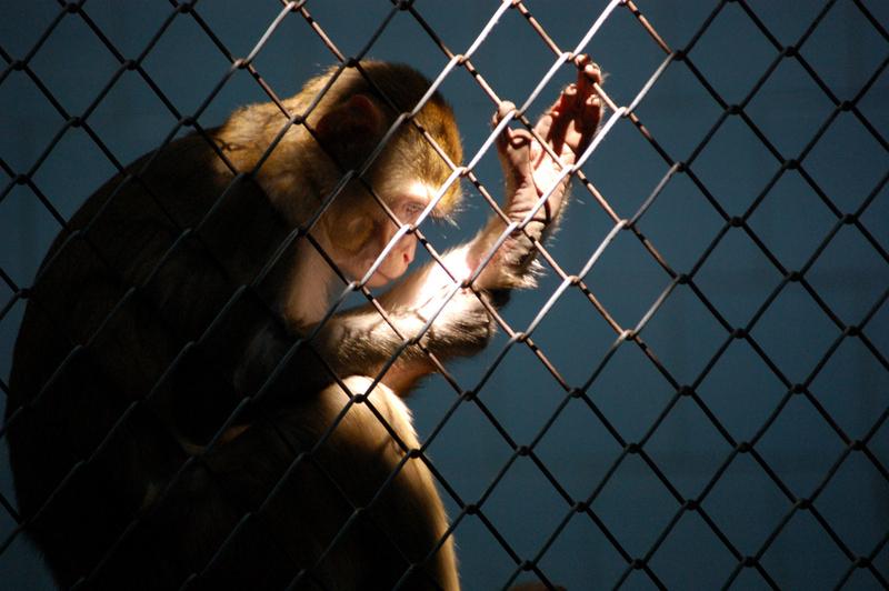 Scimmietta da sola