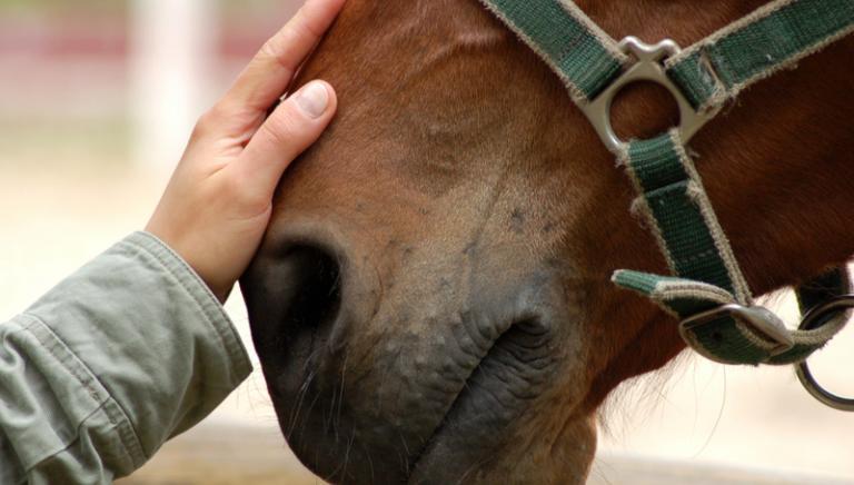 Macellare cavalli da corsa (non destinati al mattatoio) è reato