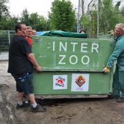La gabbia della tigre viene portata nell'area che la accoglierà