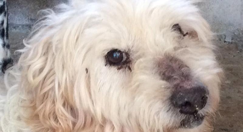 Canile Parrelli: emergenza adozioni. Tanti cani e gatti in cerca di una casa!