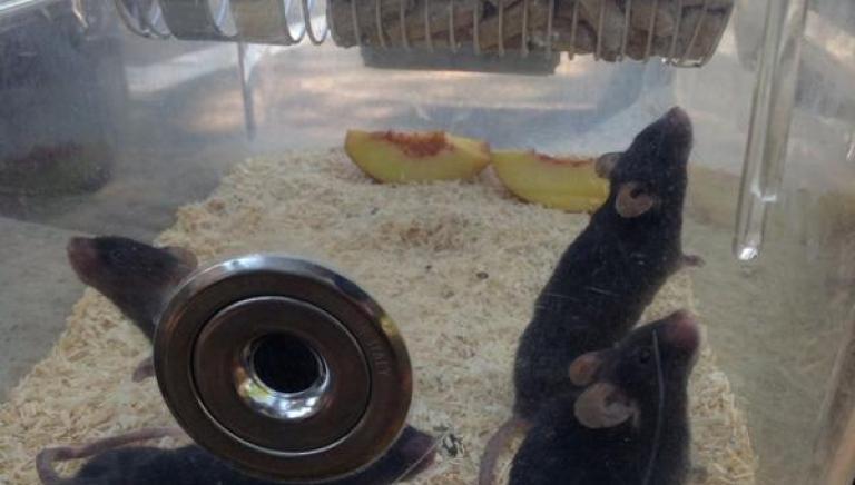 Vivisezione: in salvo 49 topi del Mario Negri Sud. 1° sequestro in Italia da Istituto autorizzato