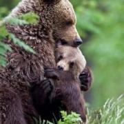 Mamma e cuccioli non possono essere separati!