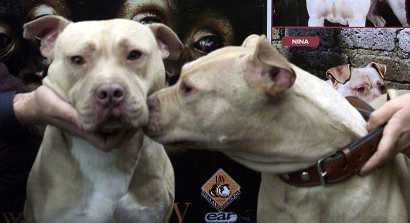 LAV chiede a Ministro Lorenzin rinnovo Ordinanza su tutela incolumità pubblica da aggressione cani.