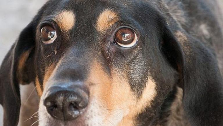 Lettera aperta al Sindaco: uffici in vacanza bloccano trasferimento animali.