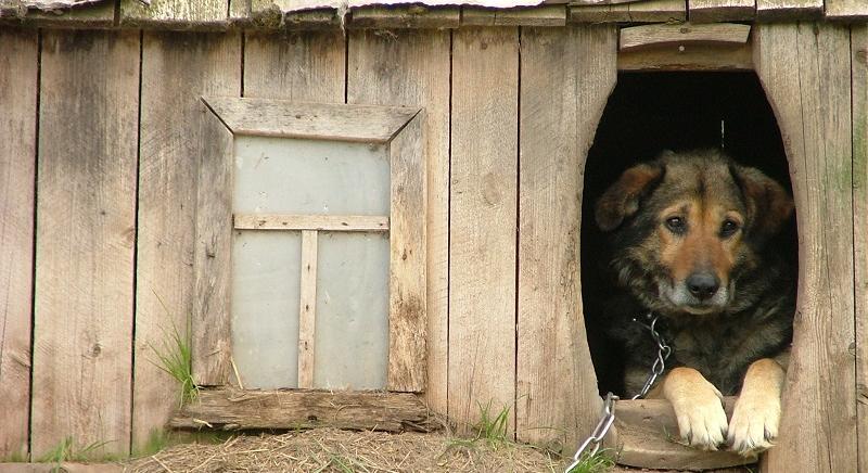 Detenzione a catena di animali d'affezione: in Veneto il divieto resta