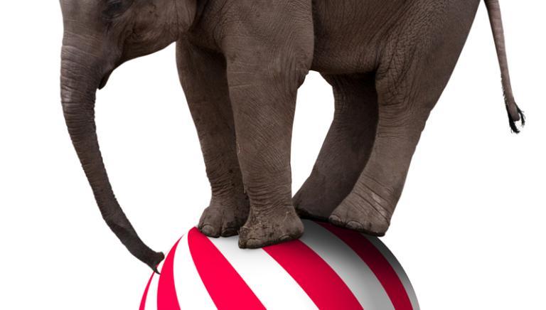 Circo con animali: ferma la riduzione dei contributi