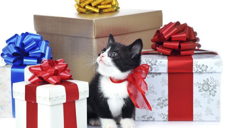 Tante idee regalo per il tuo Natale solidale con gli animali