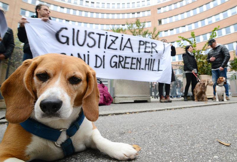 Processo Green Hill
