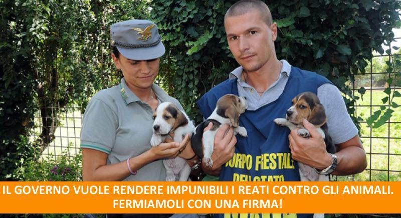 Governo e Parlamento vogliono rendere non più punibili i reati contro gli animali. FERMIAMOLI.