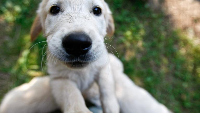 Crimini sessuali contro gli animali, Dossier LAV