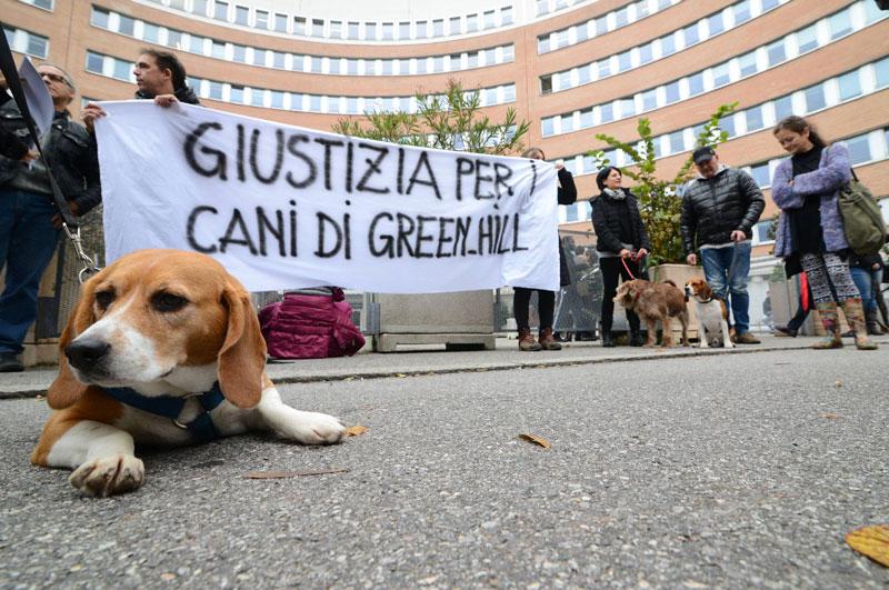 I beagle presenti ad un'udienza del processo contro Green Hill