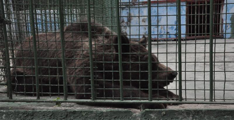 L?orsa ?Caterina? presso il Ditellandia Park di Mondragone