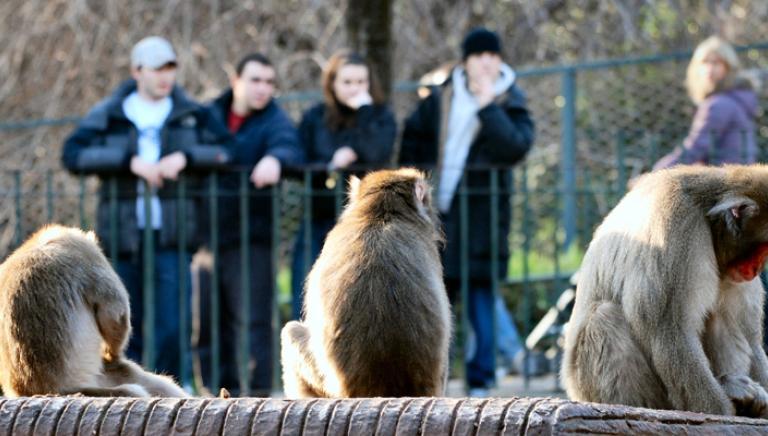 No ad un nuovo zoo a Torino a distanza di trent'anni