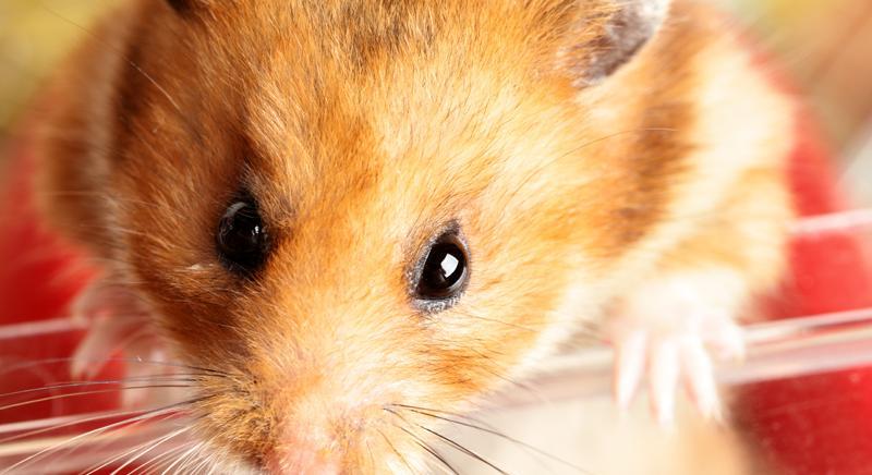 Pentolaccia con criceti. Vogliamo giustizia e approvazione regolamento comunale diritti animali