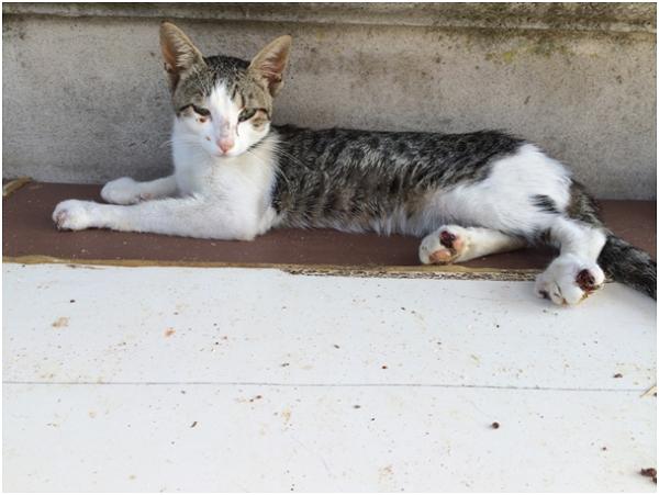 Un gatto del canile 'Dimensione Animali'