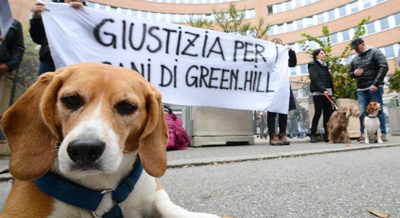 Green Hill: Lorenzin apra inchiesta su operato dei suoi ispettori