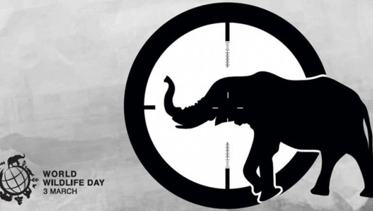WORLD WILDLIFE DAY: emergenza planetaria, cresce il traffico illegale di fauna selvatica