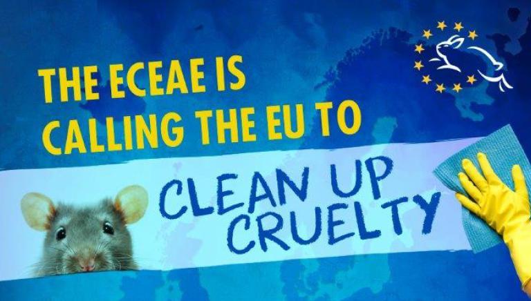 Le associazioni europee chiedono all'UE di vietare test animali per i detersivi