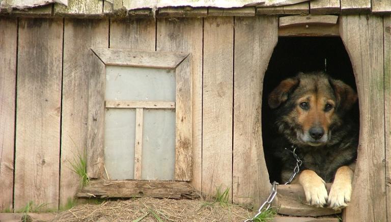 Reati contro gli animali. Preoccupazione sul testo finale, chiediamo chiarimenti