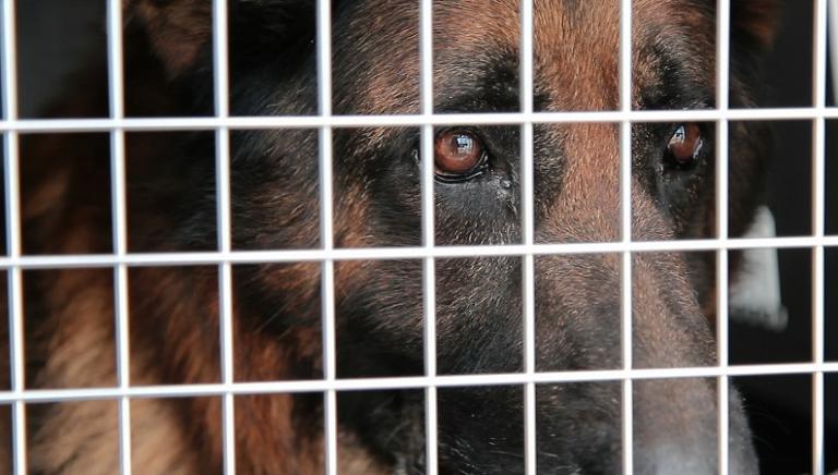 Parrelli: fuori l'ultimo cane! Ora sia revocata l'autorizzazione sanitaria