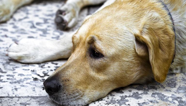 Reati contro animali non sono stati depenalizzati. Ora si migliori il Codice