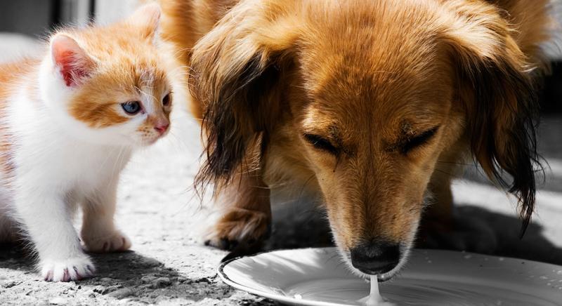 La Lombardia stanzia 2 mln di Euro per prevenzione randagismo e tutela animali