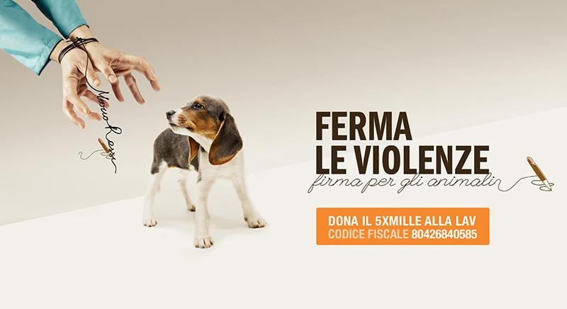 Con il tuo 5x1000 ci aiuterai a fermare le violenze sugli animali