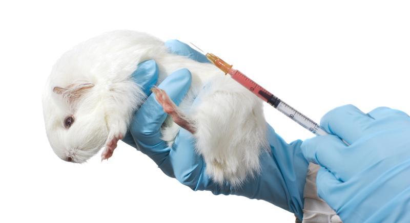"""Vivisezione, oggi è la Giornata Mondiale degli Animali """"da laboratorio"""""""