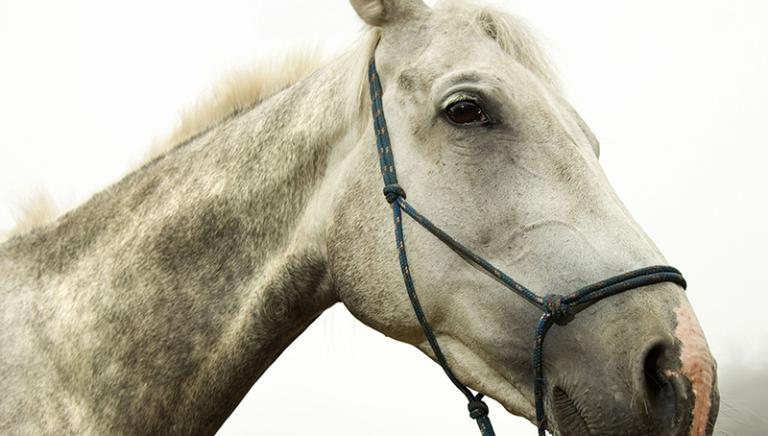 Cavalli dopati e corse clandestine: bene contributo collaboratori di giustizia