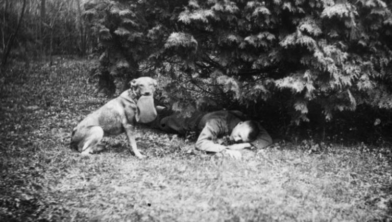 """""""Animali nella Grande Guerra"""": eroi dimenticati della I Guerra Mondiale"""