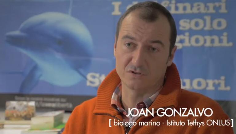Pubblicato lo studio del biologo Joan Gonzalvo sui delfini nei delfinari