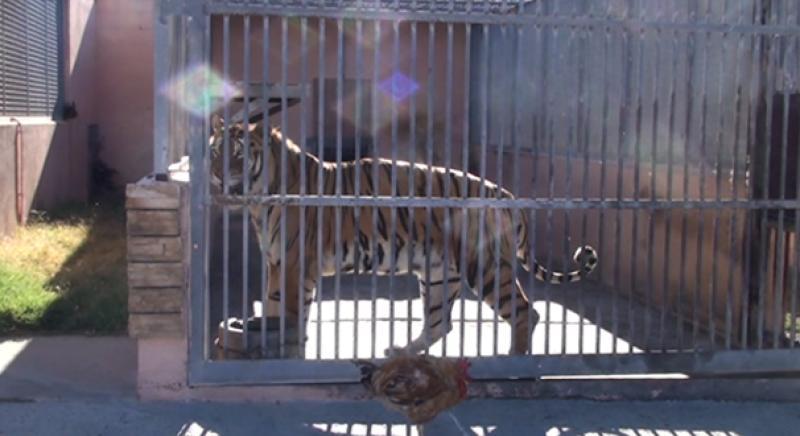Sardegna: immagini shock degli animali detenuti all'Odry Zoo