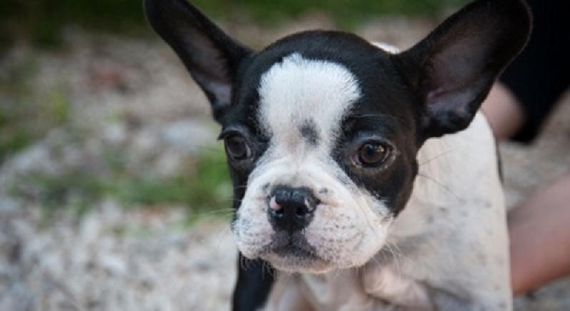 L'Italia non abbassa la guardia sul traffico cuccioli