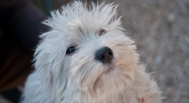 Busto Arsizio: nuovo processo contro trafficanti di cuccioli. Fermiamoli!