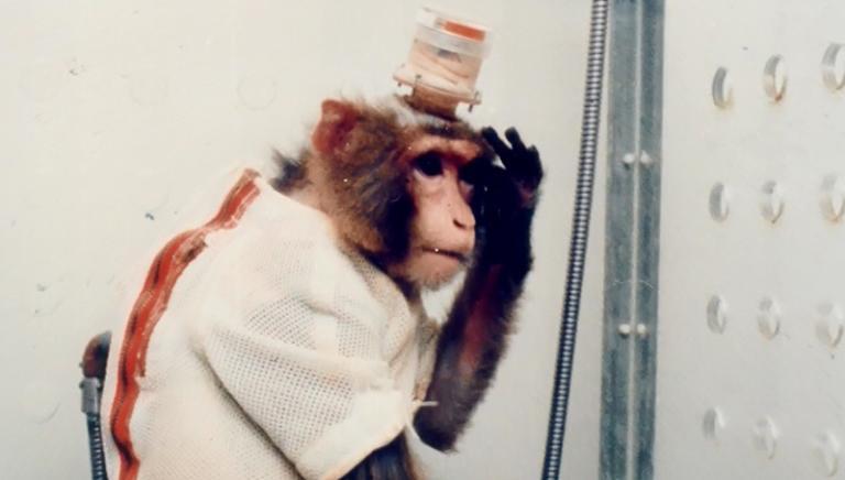 Cervelli animali collegati con elettrodi: come non definirla vivisezione?