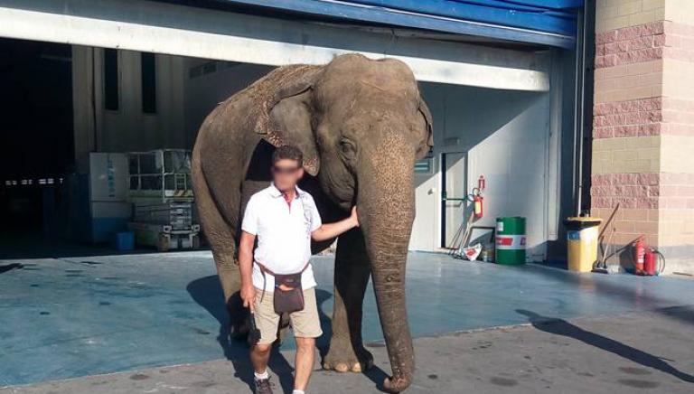 Viareggio: festa privata con elefante. Arriva lo stop!