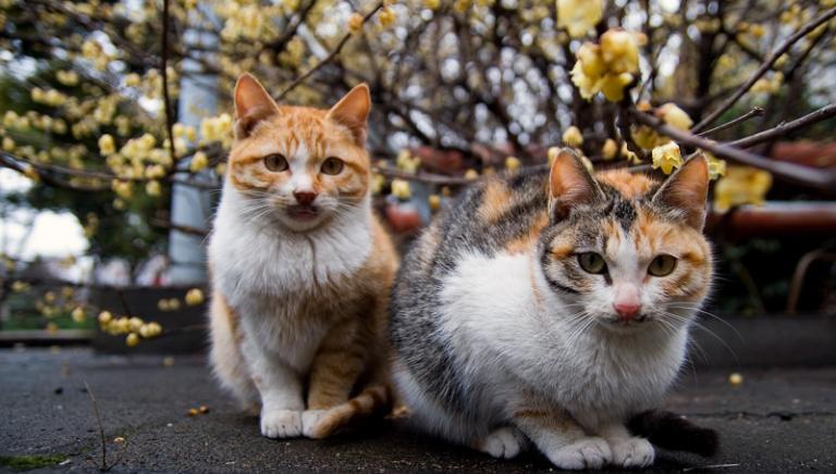 Lucca cancella 60 colonie feline. Provvedimento illegittimo, fermatevi!