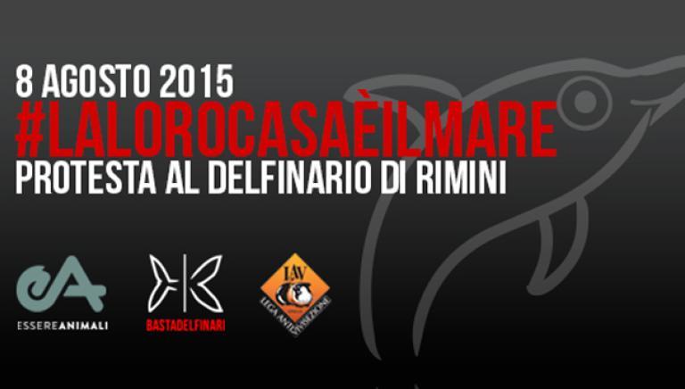 Domani 8 agosto nuova protesta davanti al delfinario di Rimini