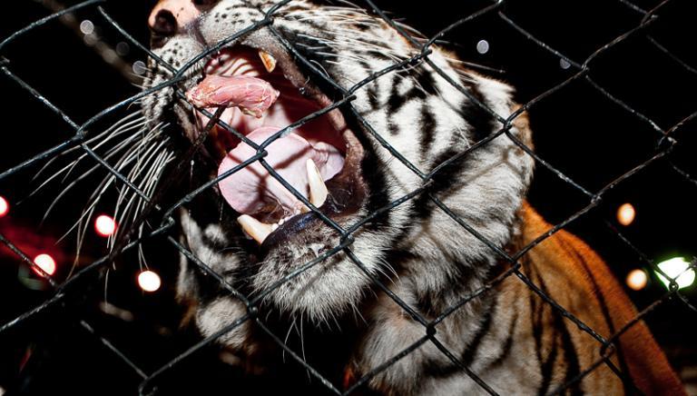 Vandali al Circo Orfei a Mestre: la nostra dichiarazione