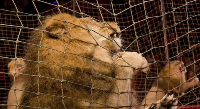Animalisti aggrediti: due circensi minorenni rinviati a giudizio