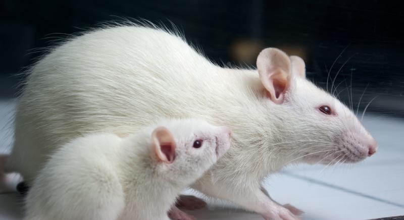 Roma ospiterà un congresso pro-vivisezione. Assurdo ma vero!