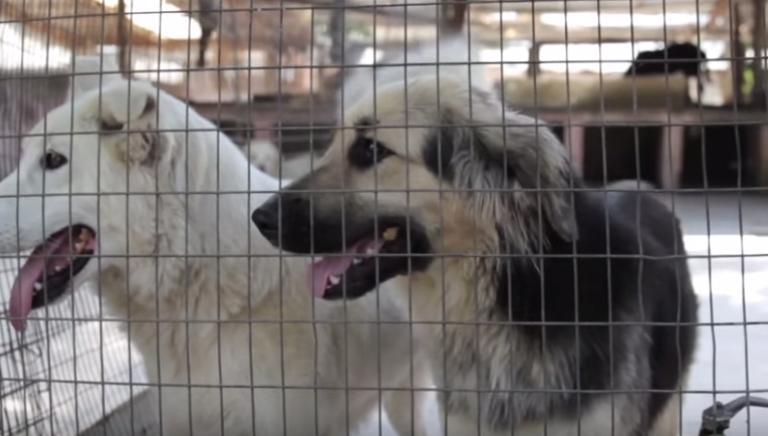 La tutela giuridica degli animali. Perché è importante?