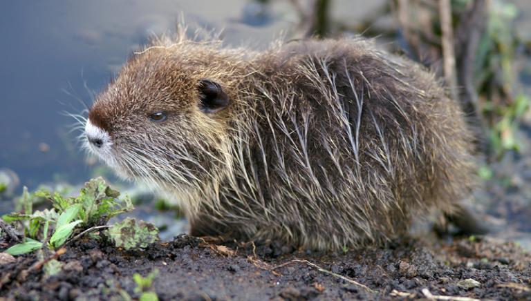 Tutela fauna selvatica una legge inutile? Caro Report hai sbagliato