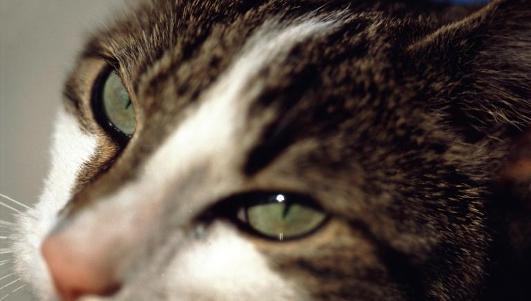 Grosseto, siamo parte civile al Processo per uccisione del gatto Bombolo